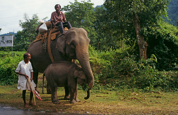 National Park「Elephants On Road」:写真・画像(4)[壁紙.com]