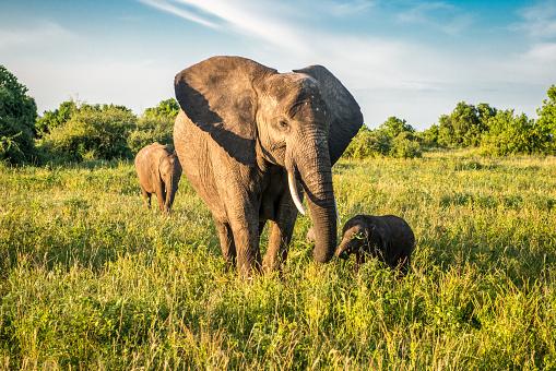 Elephant「Mother and child」:スマホ壁紙(9)