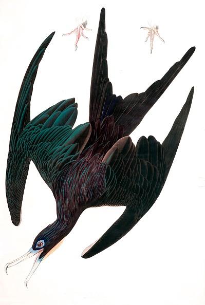 Beak「Frigate Pelican」:写真・画像(17)[壁紙.com]
