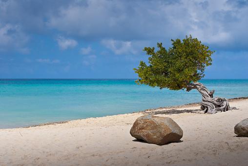 アルーバビーチ「ディビディビの木にアルバ島のビーチ」:スマホ壁紙(2)