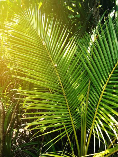 Palm tree leaf in the sunlight:スマホ壁紙(壁紙.com)