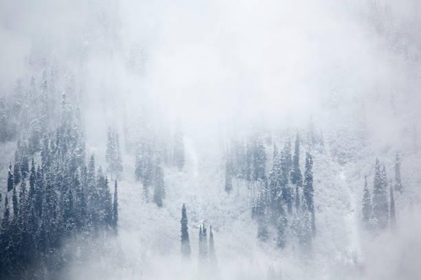 View of snowfall in foggy forest.:スマホ壁紙(壁紙.com)