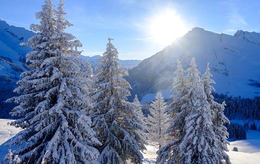 Snowdrift「View of snow covered fir trees」:スマホ壁紙(4)