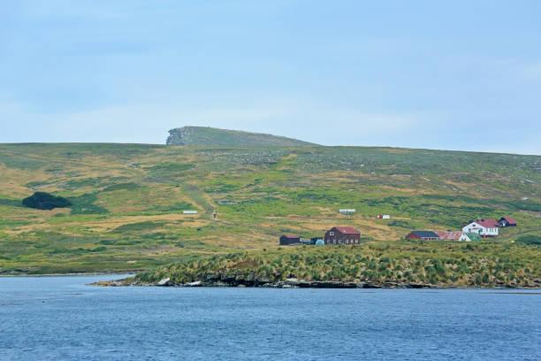 A coastal farming community on New Island in the Falklands.:スマホ壁紙(壁紙.com)