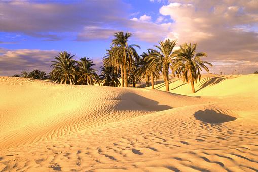 Treelined「Desert and palm trees, Tunisia」:スマホ壁紙(17)