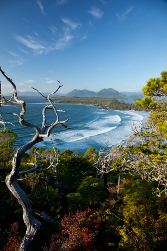 UNESCO「The View Of Cox Bay And Surrounding Mountains And Temperate Rainforest Near Tofino」:スマホ壁紙(1)