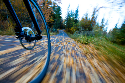 Aspen Tree「The view of the front wheel of a cyclo-cross commuter bike and the aspen leaves on a bicycle pathway in fall.」:スマホ壁紙(3)