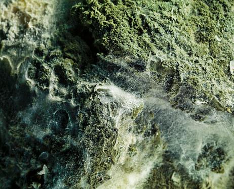 Deterioration「Green mould, close up detail」:スマホ壁紙(6)