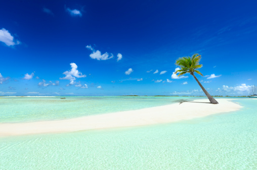 Bahamas「Tropical white sand cay beach with lonely coconut palm tree」:スマホ壁紙(2)