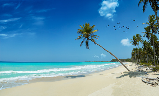 島「トロピカルな白砂のビーチの聖母」:スマホ壁紙(18)