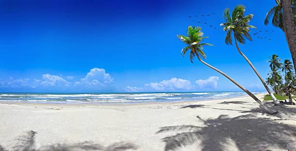 Tropical white sand virgin beach:スマホ壁紙(壁紙.com)