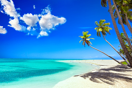 Turquoise Colored「Tropical white sand beach in Caribbean island with coconut trees」:スマホ壁紙(9)