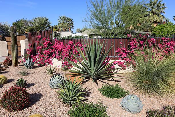 Stunning Succulent And Cactus Water Conservation Garden:スマホ壁紙(壁紙.com)