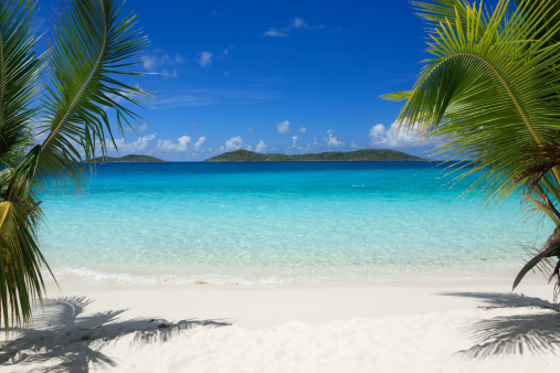 Palm Tree「Virgin Islands beach」:スマホ壁紙(5)
