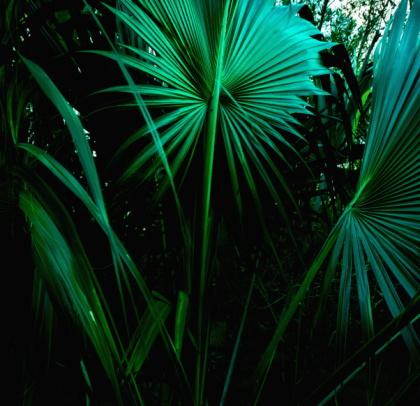 St「US Virgin Islands, St. Thomas, Tropical leaves」:スマホ壁紙(15)