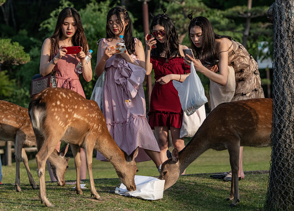 Animal Themes「Nara's Wild Deer」:写真・画像(1)[壁紙.com]