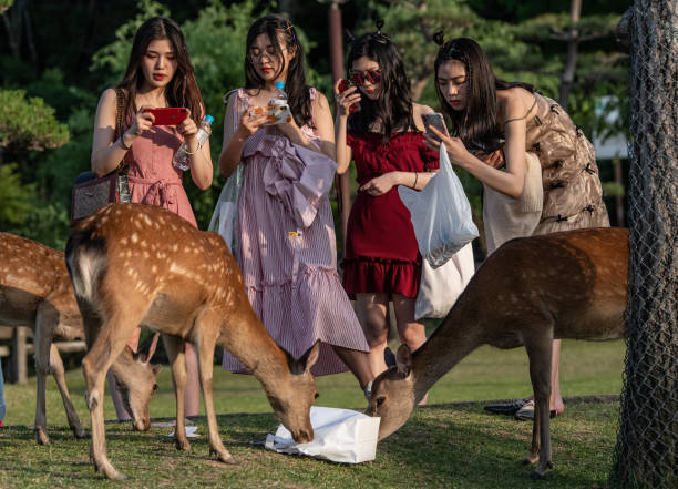 Nara's Wild Deer:ニュース(壁紙.com)