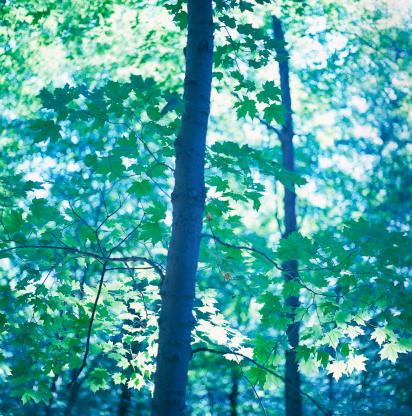 Arboreal Animal「Trees」:スマホ壁紙(19)
