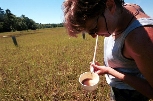 Grass「Potential West Nile Virus outbreak」:写真・画像(8)[壁紙.com]