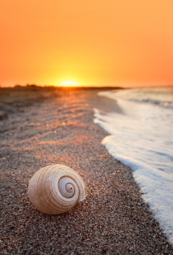 Lagoon「Shell at sunset」:スマホ壁紙(0)