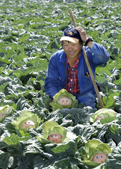 Cabbage「Farmer Howe Young of Young Wah Chong fa」:写真・画像(1)[壁紙.com]