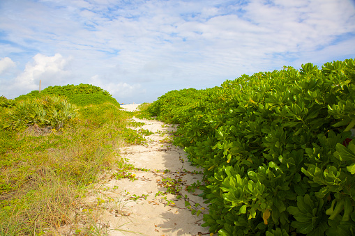 Miami Beach「Path on dune between sea grapes, Miami Beach」:スマホ壁紙(14)