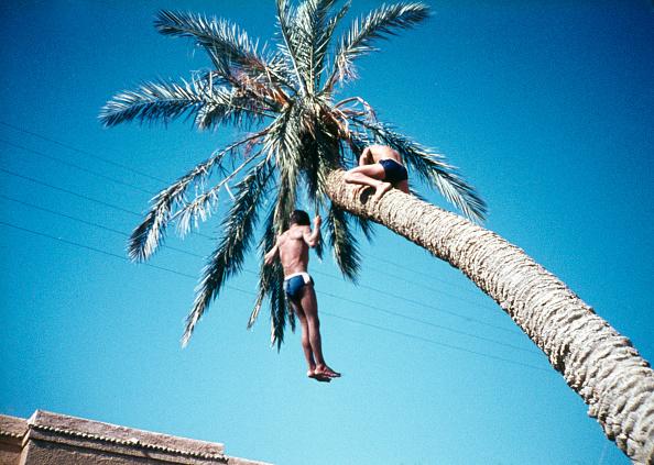 Frances M「Boys Hang From Palm Tree」:写真・画像(16)[壁紙.com]