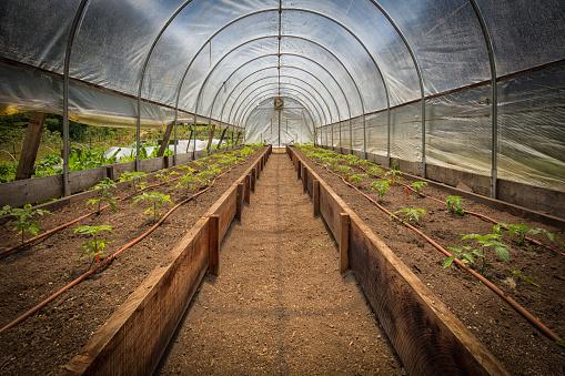 Planting「Inside a greenhouse」:スマホ壁紙(9)