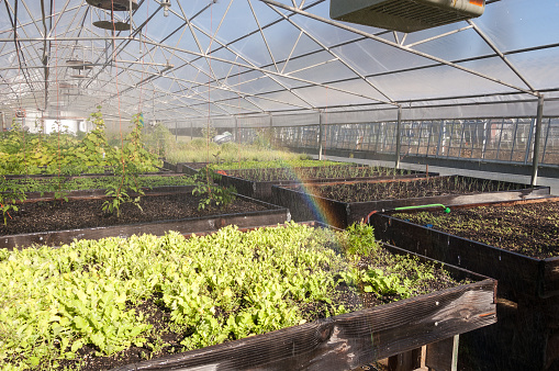 Rainbow「Inside a greenhouse while the plants are being irrigated」:スマホ壁紙(4)