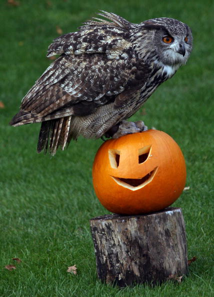 Animal「Animals Get Into The Spirit Of Halloween At Bristol Zoo Gardens」:写真・画像(6)[壁紙.com]