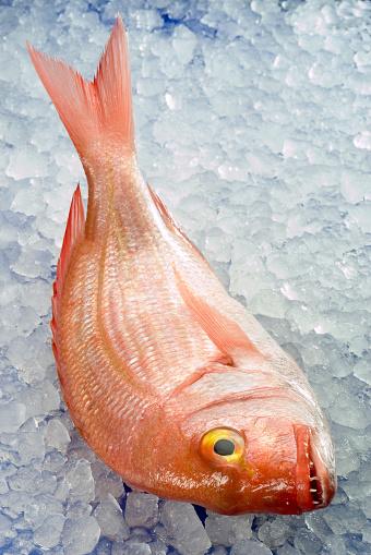 Sea Bream「Pagellus erythrinus」:スマホ壁紙(16)