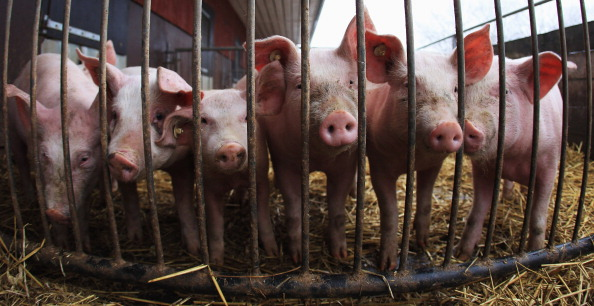 Farm「Organic Farms Likely To Benefit From Dioxin Scandal」:写真・画像(10)[壁紙.com]