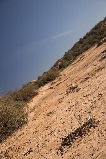 Photoshot「Animal bones in the desert, Mungo National Park, Australia」:スマホ壁紙(12)