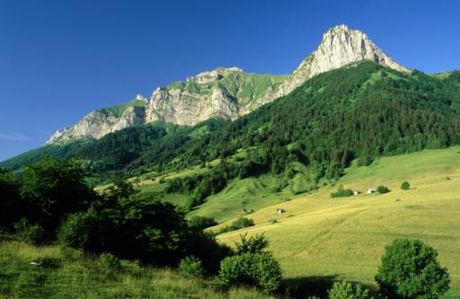 Savoie「Tree covered mountains」:スマホ壁紙(18)