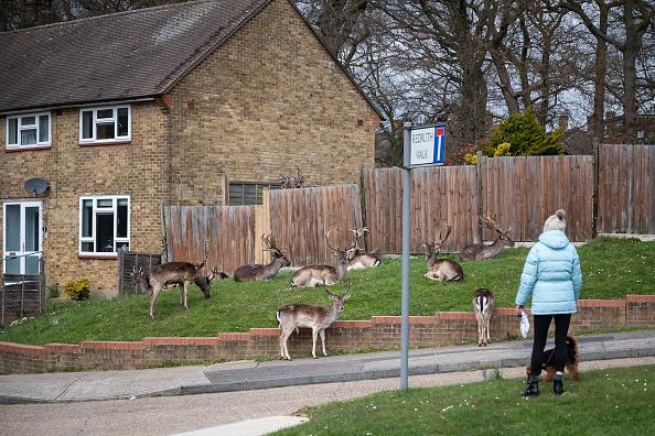 animal「UK On Lockdown Due To Coronavirus Pandemic」:写真・画像(11)[壁紙.com]