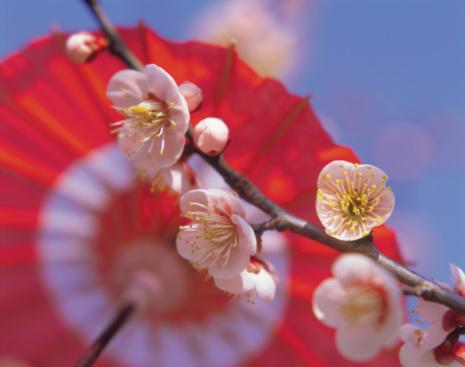 Plum blossom「Ume」:スマホ壁紙(15)