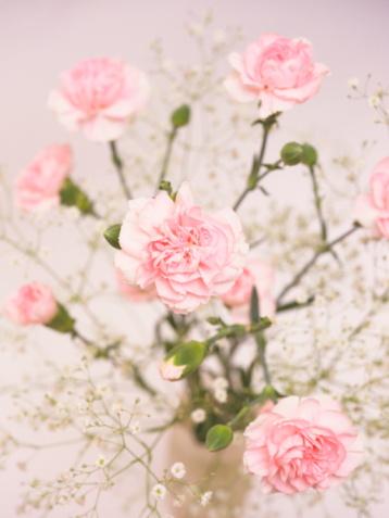 カーネーション「Carnations and gypsophila in a vase」:スマホ壁紙(0)