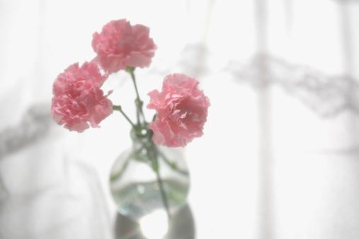 カーネーション「Carnations in vase」:スマホ壁紙(17)