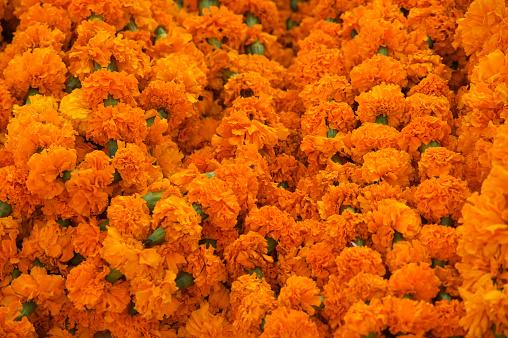 カーネーション「Carnations for sale for Diwali, Jaipur, India」:スマホ壁紙(19)