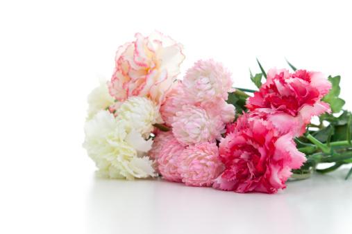 カーネーション「Carnations on the white background」:スマホ壁紙(1)