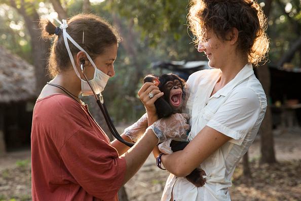 Volunteer「Rehabilitating Chimpanzees - A Labour Of Love」:写真・画像(11)[壁紙.com]