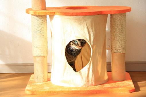 Scratching Post「Cat inside a cat tower」:スマホ壁紙(11)