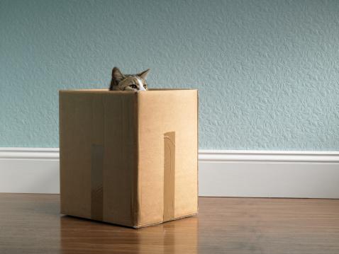 Curiosity「Cat inside removal box」:スマホ壁紙(19)