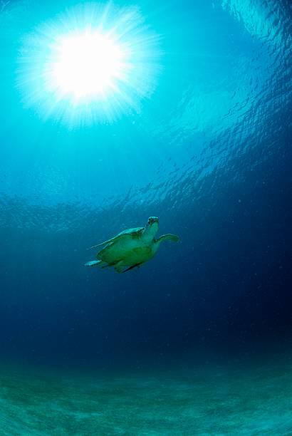 Philippines, green sea turtle:スマホ壁紙(壁紙.com)