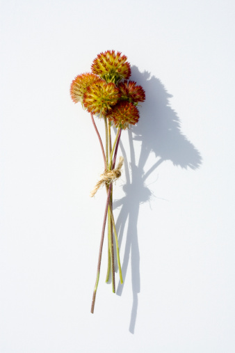 花「Bunch of dried flowers on white background」:スマホ壁紙(8)