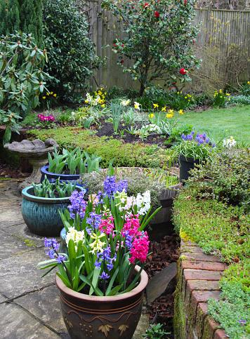 Hellebore「Bright flowers in early spring domestic garden, England.」:スマホ壁紙(7)