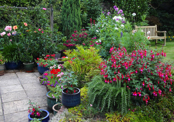 Bright flowers in English garden with patio pots & flowerbeds.:スマホ壁紙(壁紙.com)