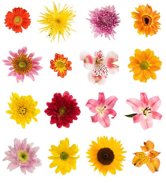 Sixteen different flowers:スマホ壁紙(壁紙.com)