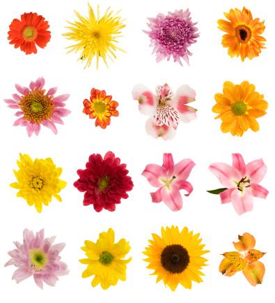 Digital Composite「Sixteen different flowers」:スマホ壁紙(19)