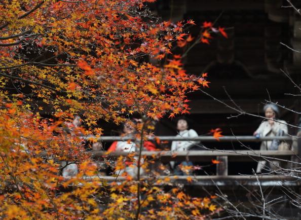 Japanese Maple「Shoshazan Engyoji Temple In Autumn Colors」:写真・画像(18)[壁紙.com]